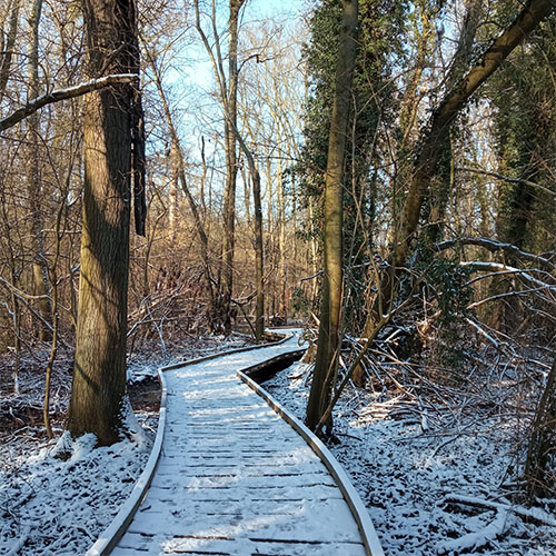 """Initiatives77 - Platelage en bois de la zone naturelle """"La Couture"""""""